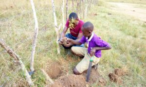 Herbert plants a tree with the head boy of the BT Primary School of Kamusenene. Tree planting to mitigate climate change and restore lost forest ecosystems is one of RESI's activities toward building sustainable rural communities.